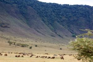 Landscape Ngnorongoro Crater