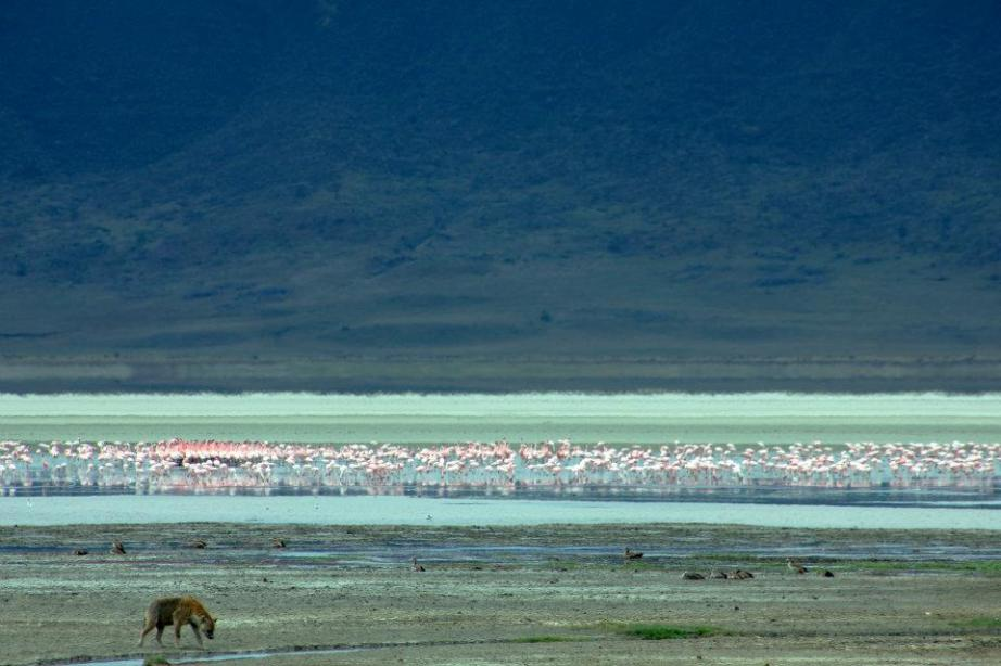 flamingoes in Tanzania