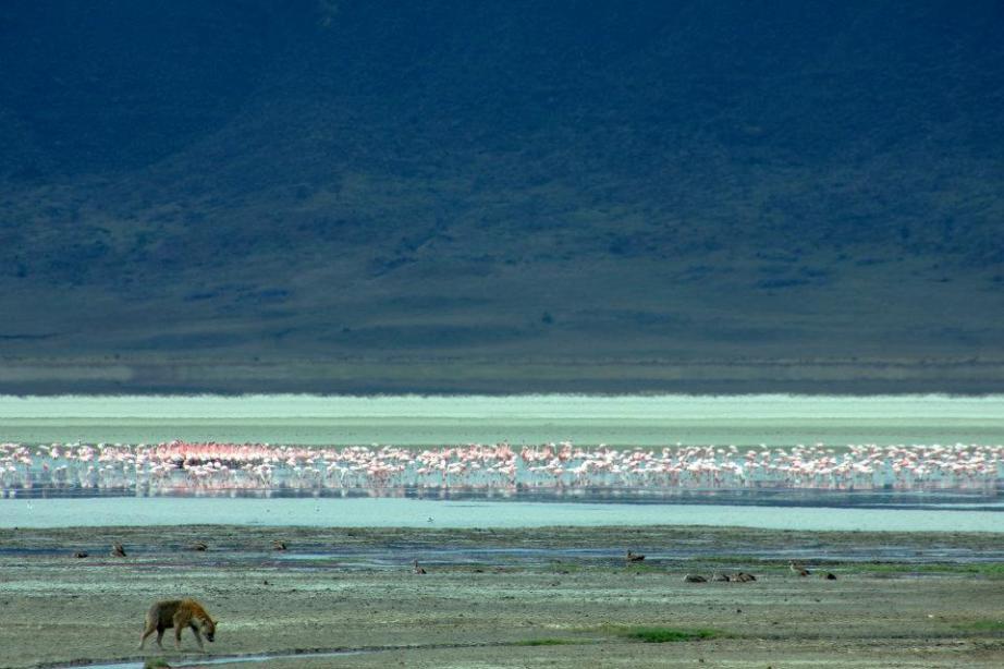 flamingoes in Tanzania
