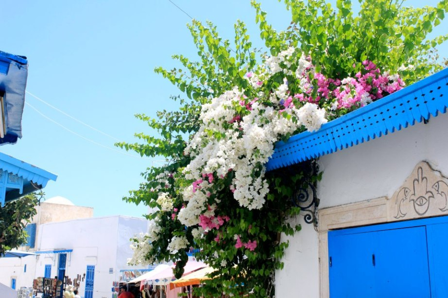 Flowers in Sidi Bou Said