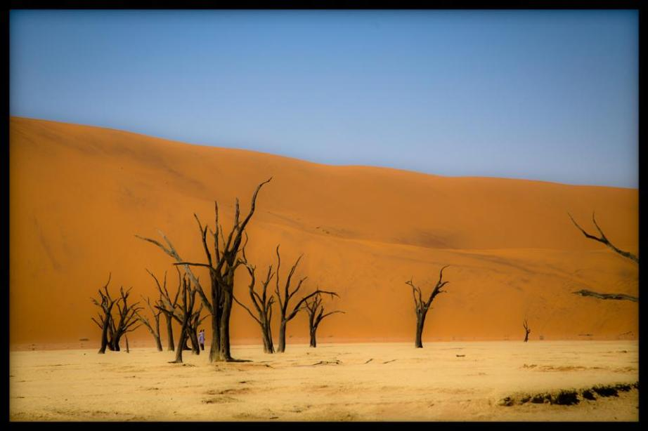 Namibian salt veld. A photograph by Jeff Corey